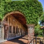 """San Juan Vines"" by lonewolf565"