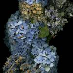 """Hydrangea Snowman"" by LindaCavaney"