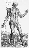 Anatomical Study, illustration from 'De Humani Cor