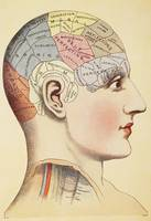 A phrenological map of the human brain