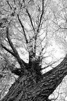 Black and white Upward Tree View