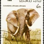 """African elephant stamp."" by FernandoBarozza"