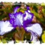 """Violet Flowers"" by DaveScott"