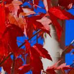 """""""fall at lake Crowley"""" by jebrunner58"""