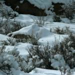 """winter landscape"" by jebrunner58"