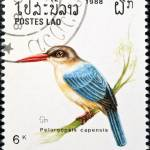 """Stork-billed kingfisher bird stamp."" by FernandoBarozza"
