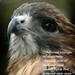 """""""new eyes"""" by MyTreasuredImages"""