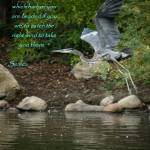 """""""finding a direction"""" by MyTreasuredImages"""