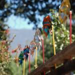 """""""pinwheels"""" by joegalura"""