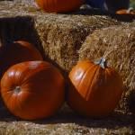 """""""pumpkins"""" by joegalura"""