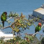"""""""Parrots of Telegraph Hill"""" by WuziCat"""