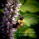 """""""Great acts"""" by MyTreasuredImages"""