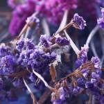 """Purple Bouquet"" by UmbrellaS"