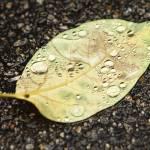 """Fall Impressions"" by UmbrellaS"