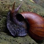 """""""Giant snail"""" by olazlo"""