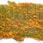 """Autumn Leaves"" by DaveScott"