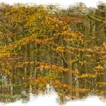 """Autumn Woods"" by DaveScott"