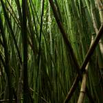 """deep bamboo"" by AlexWilson"