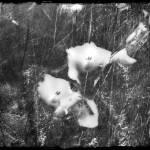 """""""Forgotten"""" by angelstudio54"""