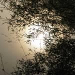 """pond"" by __Olga__"