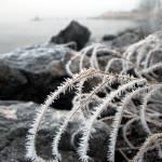 """""""bush in ice"""" by __Olga__"""