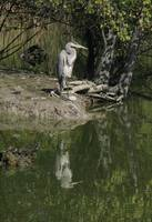 Heron (vertical)