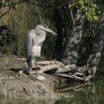 """Heron (horizontal)"" by NorthPointImages"