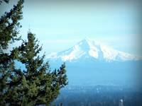mt hood evergreen