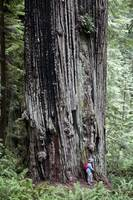 Coast Redwood Trails