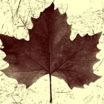 """Leaf Abstract"" by photosbybritney"