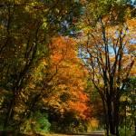 """""""Fall Lane"""" by drayer"""