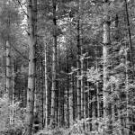 """""""Dark Wood"""" by chris-roe"""
