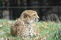 Patient Cheetah