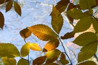 Yellow and Brown Fall Leaves