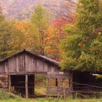 Maggie Valley Barn Art Prints & Posters by Gene Bishop