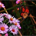 """Butterfly and wild flowers 4"" by micspics444"