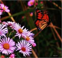 Butterfly and wild flowers 4
