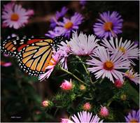 Butterfly and wild flowers 5