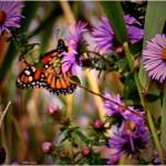 """Butterfly and wild flowers 7"" by micspics444"