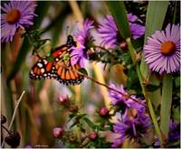 Butterfly and wild flowers 7