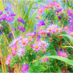 """Wild Flowers abstract"" by micspics444"
