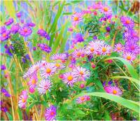 Wild Flowers abstract