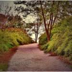 """""""Nature walk"""" by micspics444"""