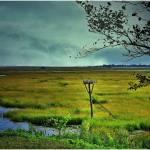 """""""The Marsh"""" by micspics444"""