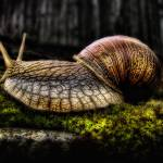 """Snail"" by InkyStudios"