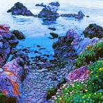 """Point Lobos rocky beach"" by sboyle"