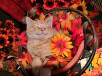 Serene Tabby Kitty Cat Kitten Grinning & Dreaming