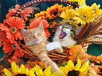 Two Kittens,Happy Kitty,Cranky Cat,Flower Basket