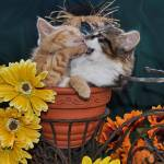 """Two Kitty Cats Kittens Fighting,Fall Flower Pot"" by Chantal"
