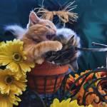 """Tabby Kitty Cat Kitten Profile,Fall Colors,Flowers"" by Chantal"